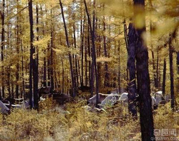世界上最大的森林 总面积为164亿市亩