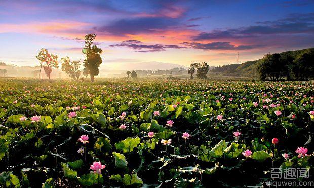 中国莲花第一村 获得世界最大莲池的称号