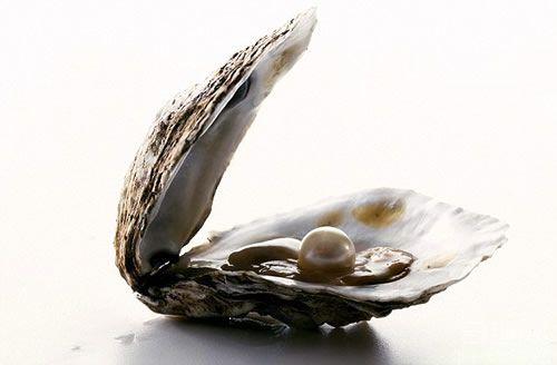 1亿年前的大牡蛎 里面可能含有世界上最大的珍珠