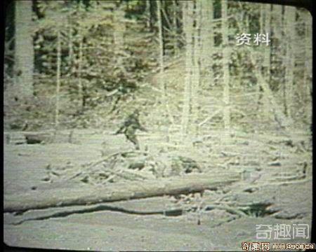 中国20位专家再次前往神农架科考野人
