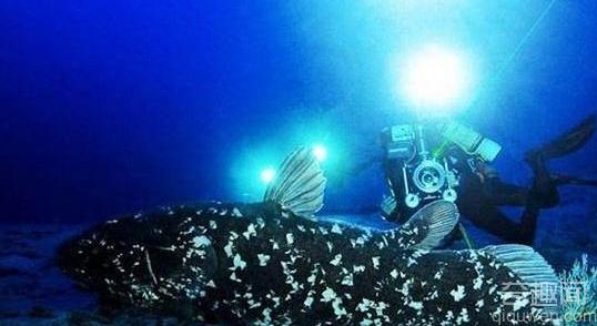 海里哪些动物最恐怖 海里最恐怖的动物排行